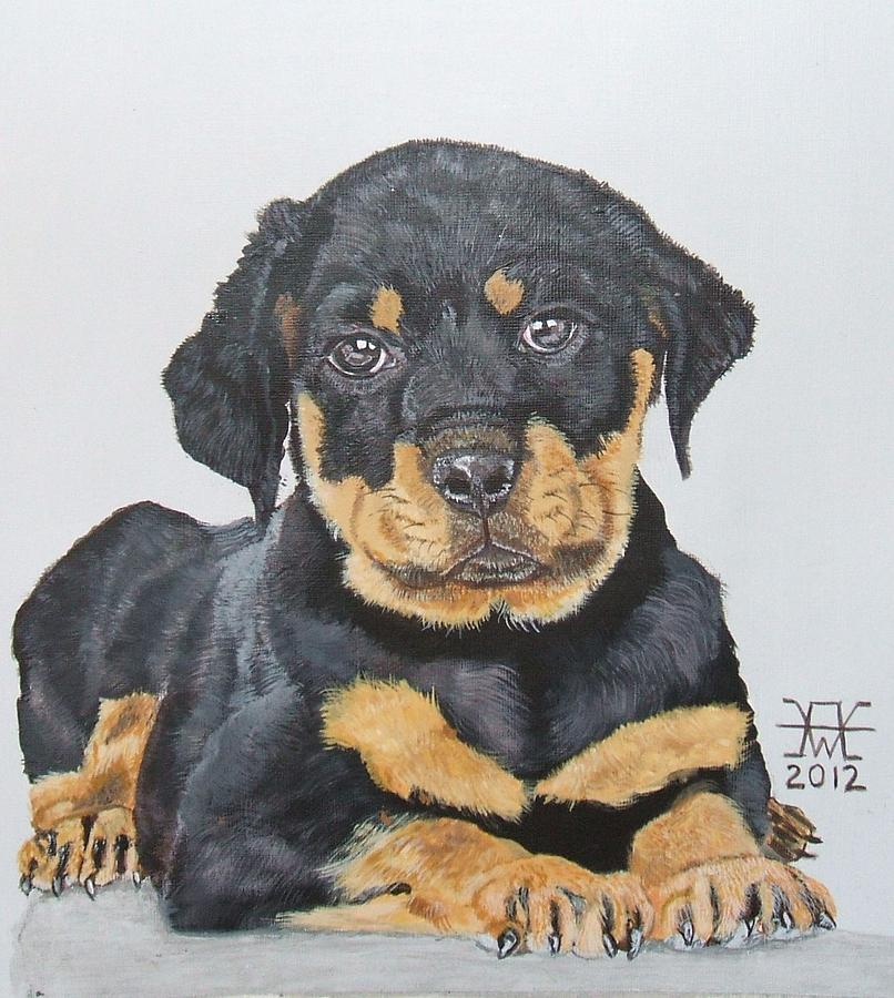 Drawn puppy rottweiler puppy Puppy Puppy Painting Rottweiler Drawing