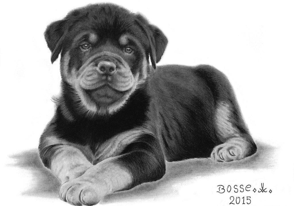 Drawn puppy rottweiler puppy On 3 DeviantArt Rottweiler by