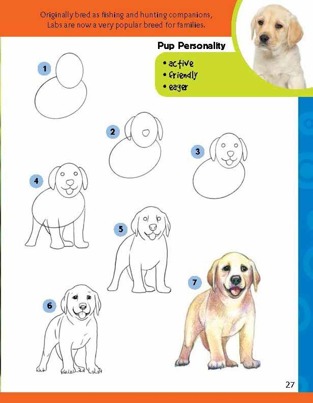 Drawn puppy step by step More step for Dogs Publisher