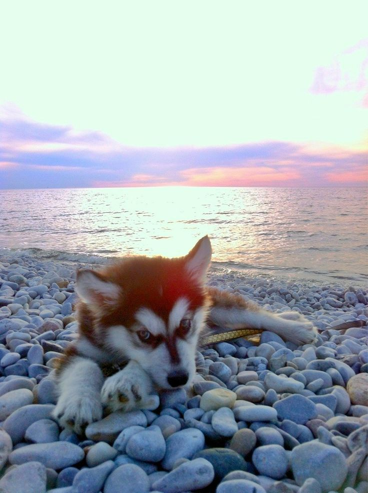 Drawn puppy sunset On Michigan Lake Imgur 1641