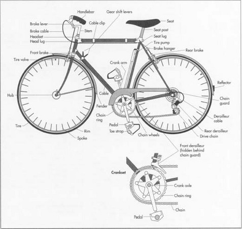 Drawn pushbike old bicycle Bicycle history How is