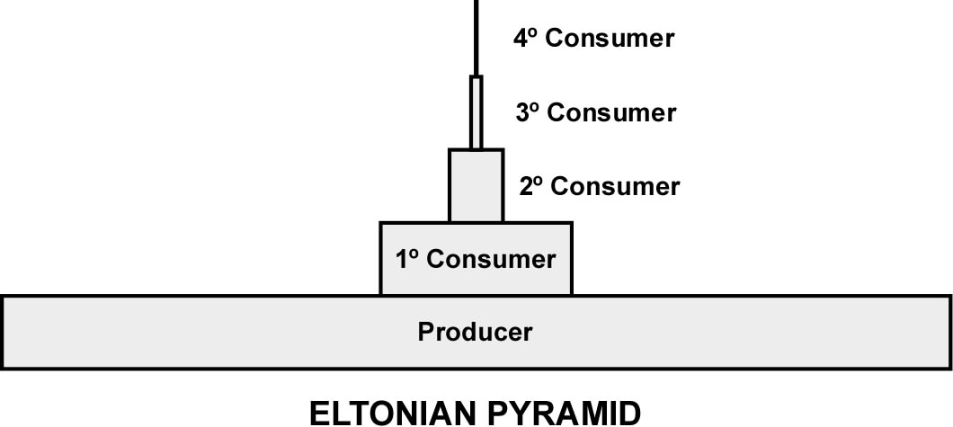 Drawn pyramid eltonian And Energy structure trophic 3