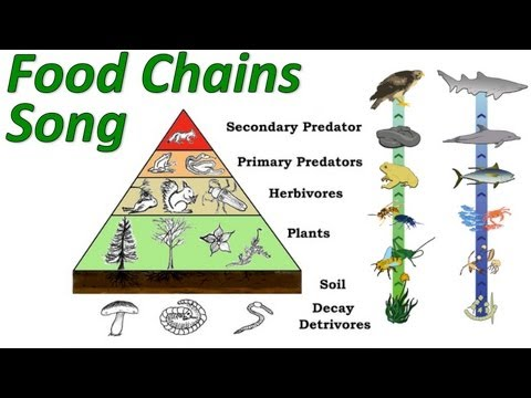 Drawn pyramid food chain Food and and Foundation CK