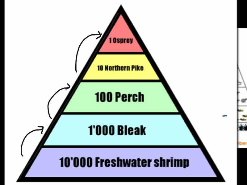 Drawn pyramid three Pyramid  of of Number