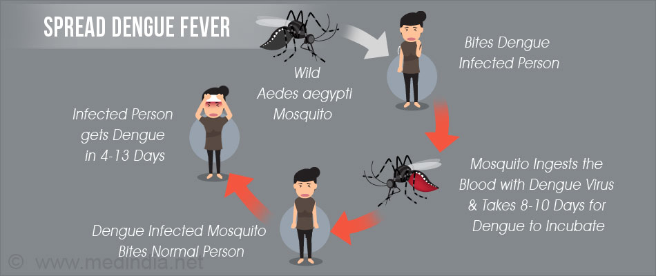 Drawn quote dengue Usually between within start Dengue