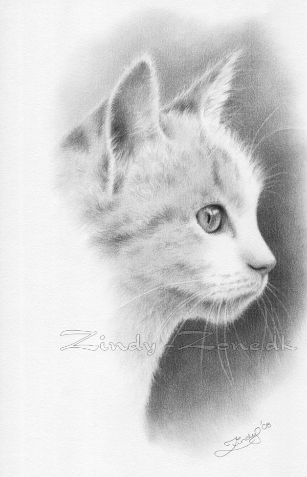 Drawn quoth pencil Masterpieces Pencil Lifelike Drawing kitten