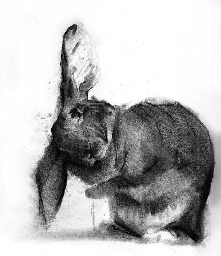 Drawn rabbit healing This Pin more on 192