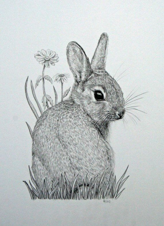 Drawn rabbit Mounted bunny Pinterest drawing of