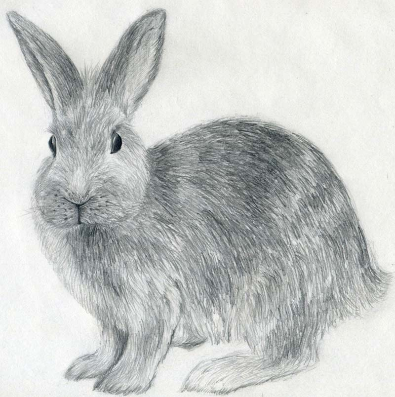 Drawn rabbit The To to enlarge How