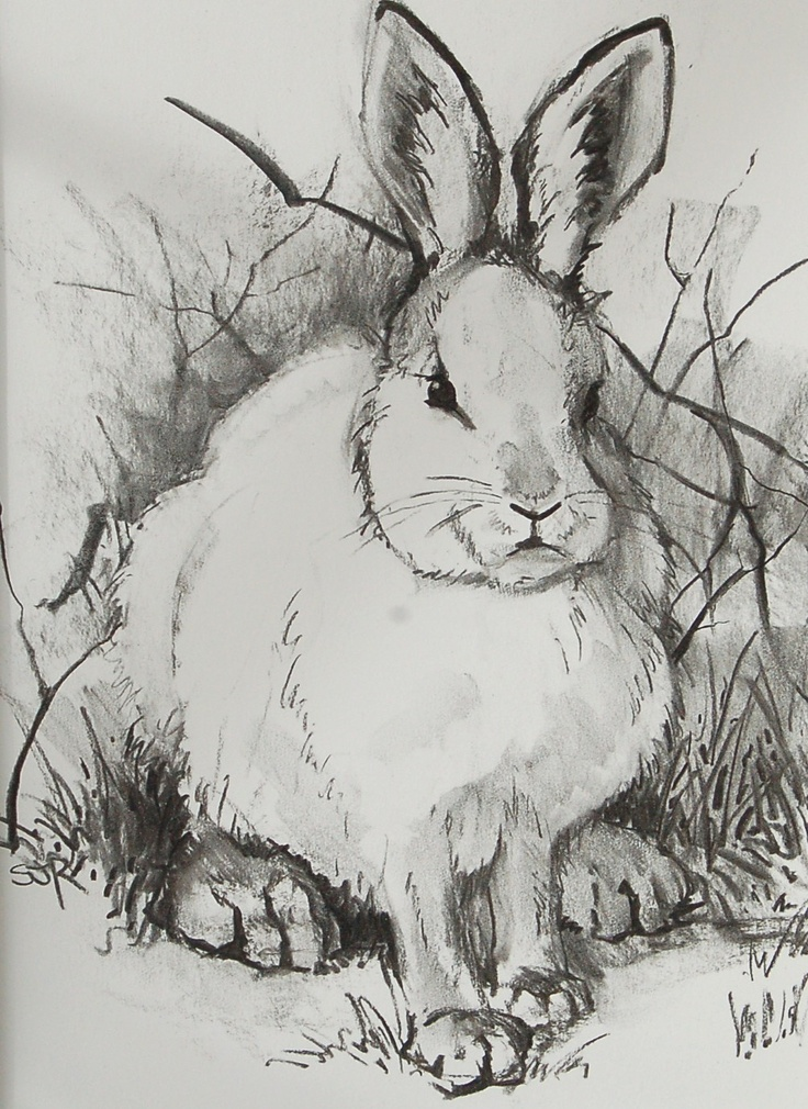 Drawn rabbid animal fur Pinterest images 33 best colored