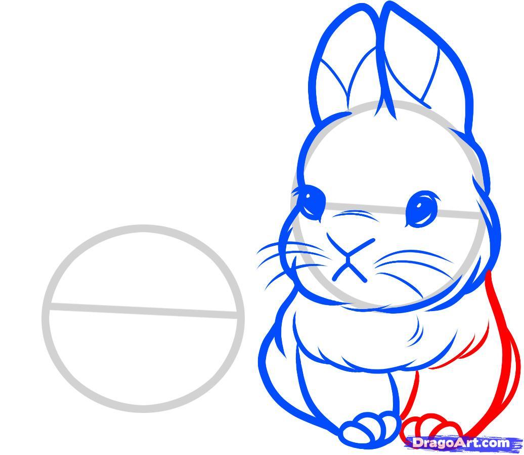 Drawn rabbid baby bunny Bunny Rabbits How  Learn