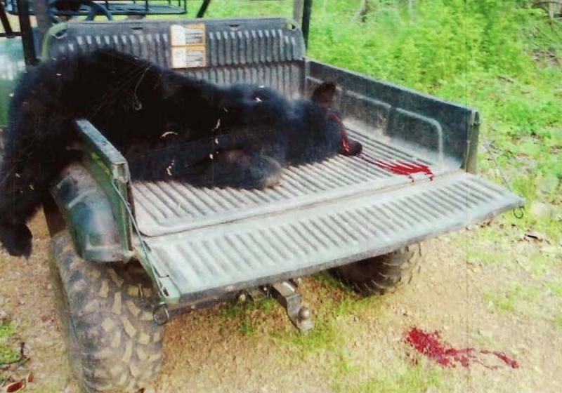 Drawn rabbid bear Freewheel Carolina attack bear Rabid