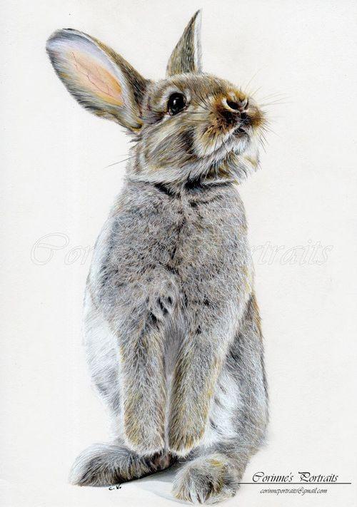 Drawn rabbid color / ideas DrawingRabbit Adorable Rabbit