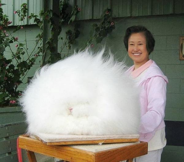 Drawn rabbid fluffy bunny Can Like  quite coat