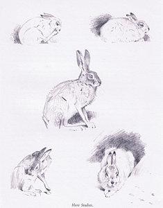 Drawn rabbid hare Drawing Rabbit Rabbit Art by
