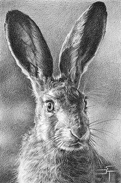 Drawn rabbid hare Portraits Today