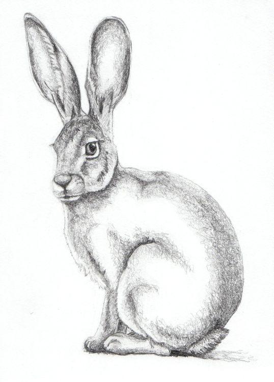 Drawn rabbid hare Pinterest of Study best Rabbit
