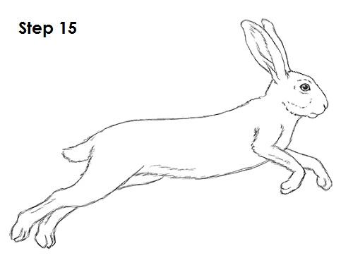 Drawn rabbid hare Drawing Hare Drawing Hare photo#18