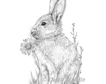 Drawn rabbid ink Drawing Rabbit Woodland Rabbit Pen