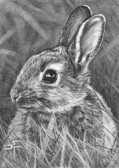 Drawn rabbid pencil Pinterest ~ Bunny Rabbit Drawings