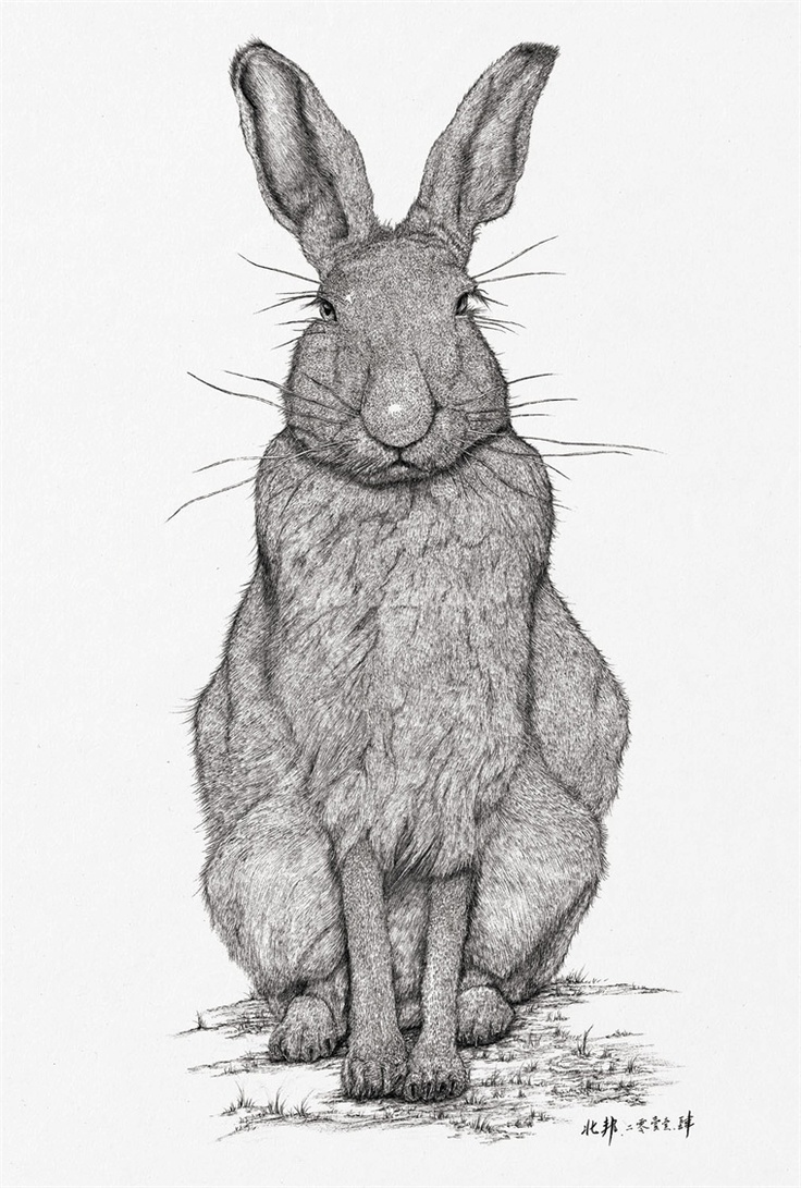 Drawn rabbid rabbit hopping Rabid best Find Rabid Pin