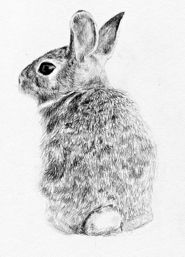 Drawn rabbid realistic Images Rabbit Drawing photo#9 Rabbit
