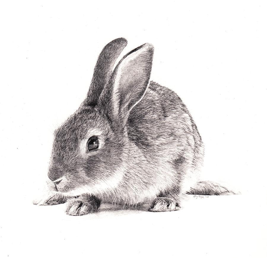 Drawn rabbid realistic Images Rabbit Drawing photo#3 Rabbit