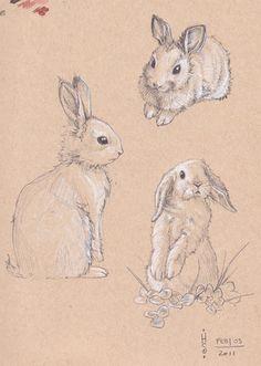Drawn rabbid wild rabbit Best rabbit drawings  Google