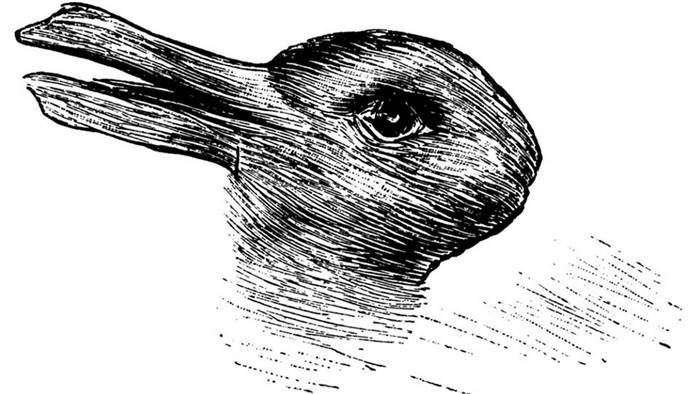 Drawn rabbit 5 year old You if both TODAY 124