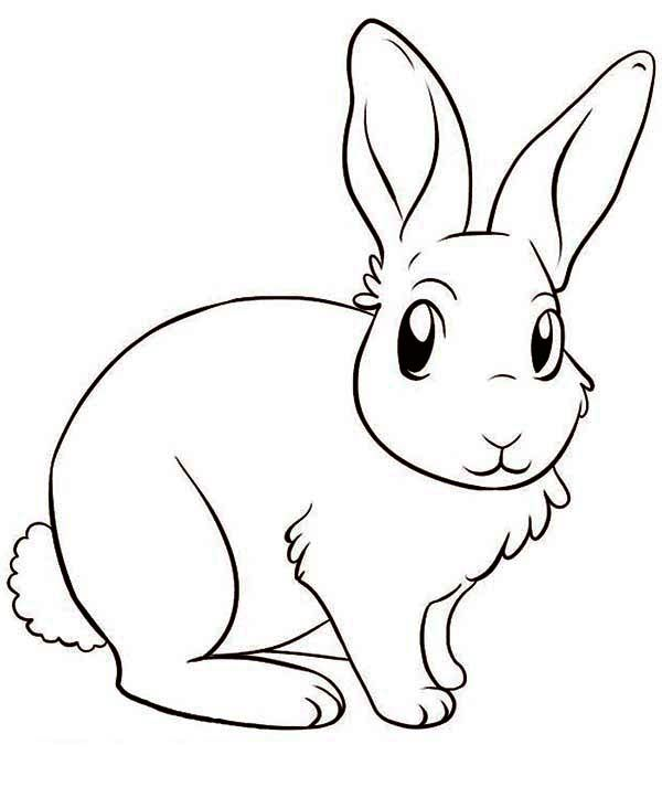 Drawn rabbit angry Images Amazing drawing Pinterest bunny