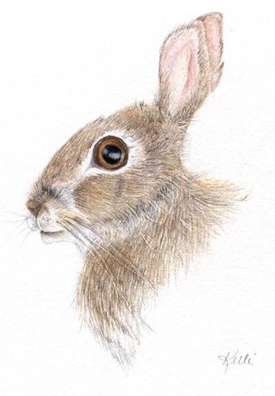 Drawn rabbit animal fur Archives Animal  Fur Colored