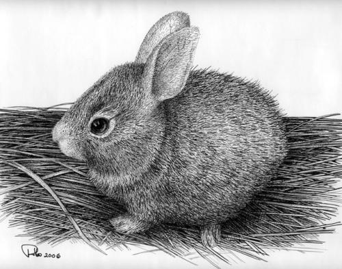 Drawn rabbit animal fur :  a Latest WetCanvas