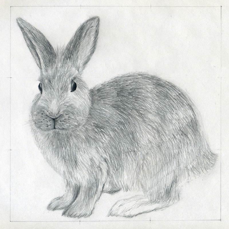 Drawn rabbit animal fur Draw anyway under erase you'll