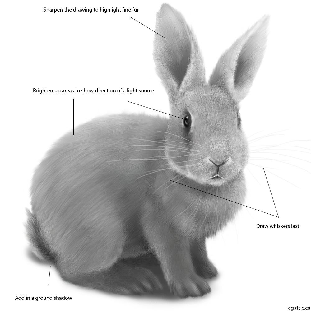 Drawn rabbit animal fur To Draw rabbit Neat