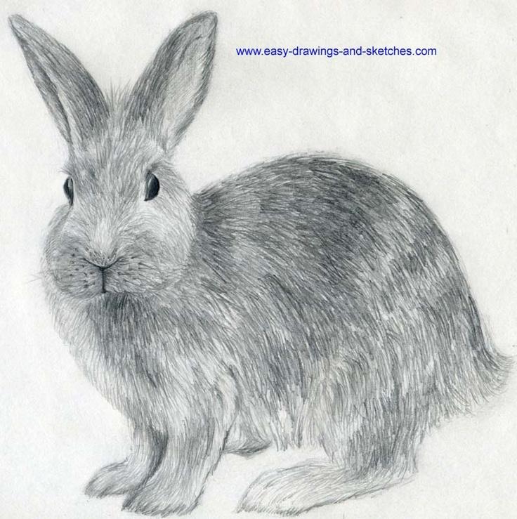 Drawn rabbit animal fur Rabbit how 16 to on