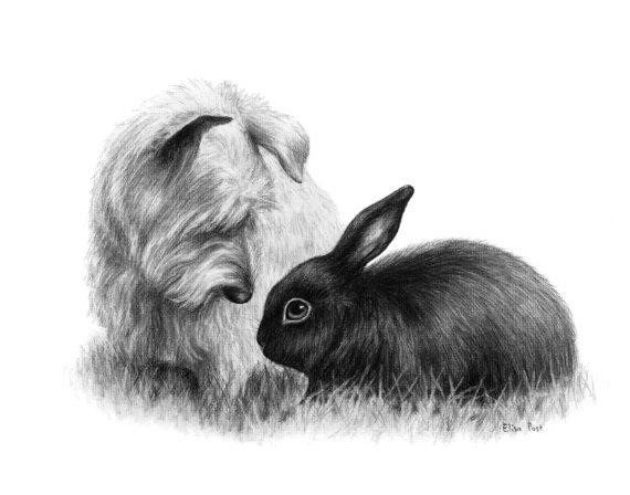 Drawn rabbit animal fur Drawing Portrait Drawing Photo Portrait