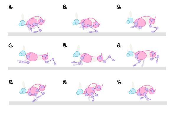 Drawn rabbit animation Movement and Rabbits Draw Hares