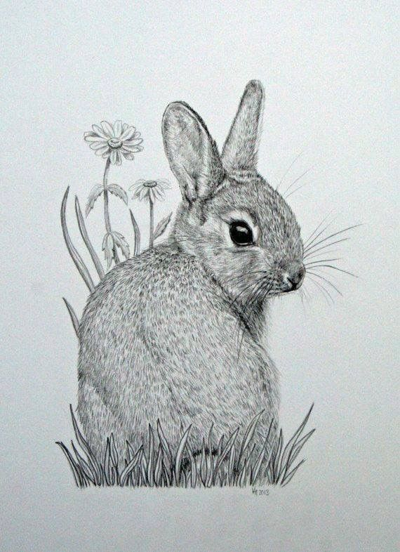Drawn rabbit baby animal Original this Pencil on Drawings