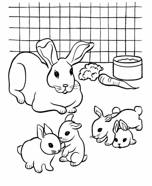 Drawn rabbit baby animal Best Pages Babies And 27