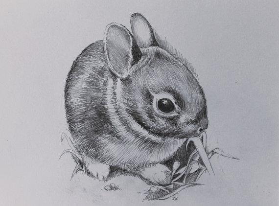 Drawn rabbid baby bunny Hand Like Baby this Drawn