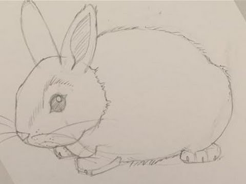 Drawn rabbit baby bunny Bunny YouTube Draw To Bunny