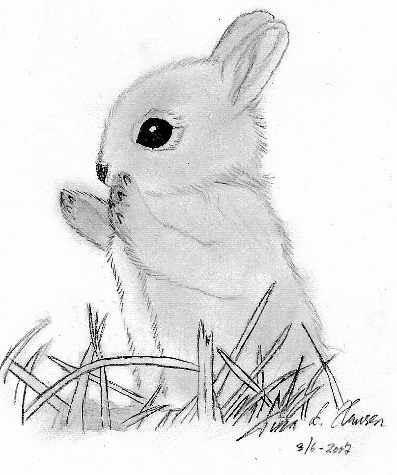 Drawn rabbit baby bunny Bunny by Bunny on superzebra