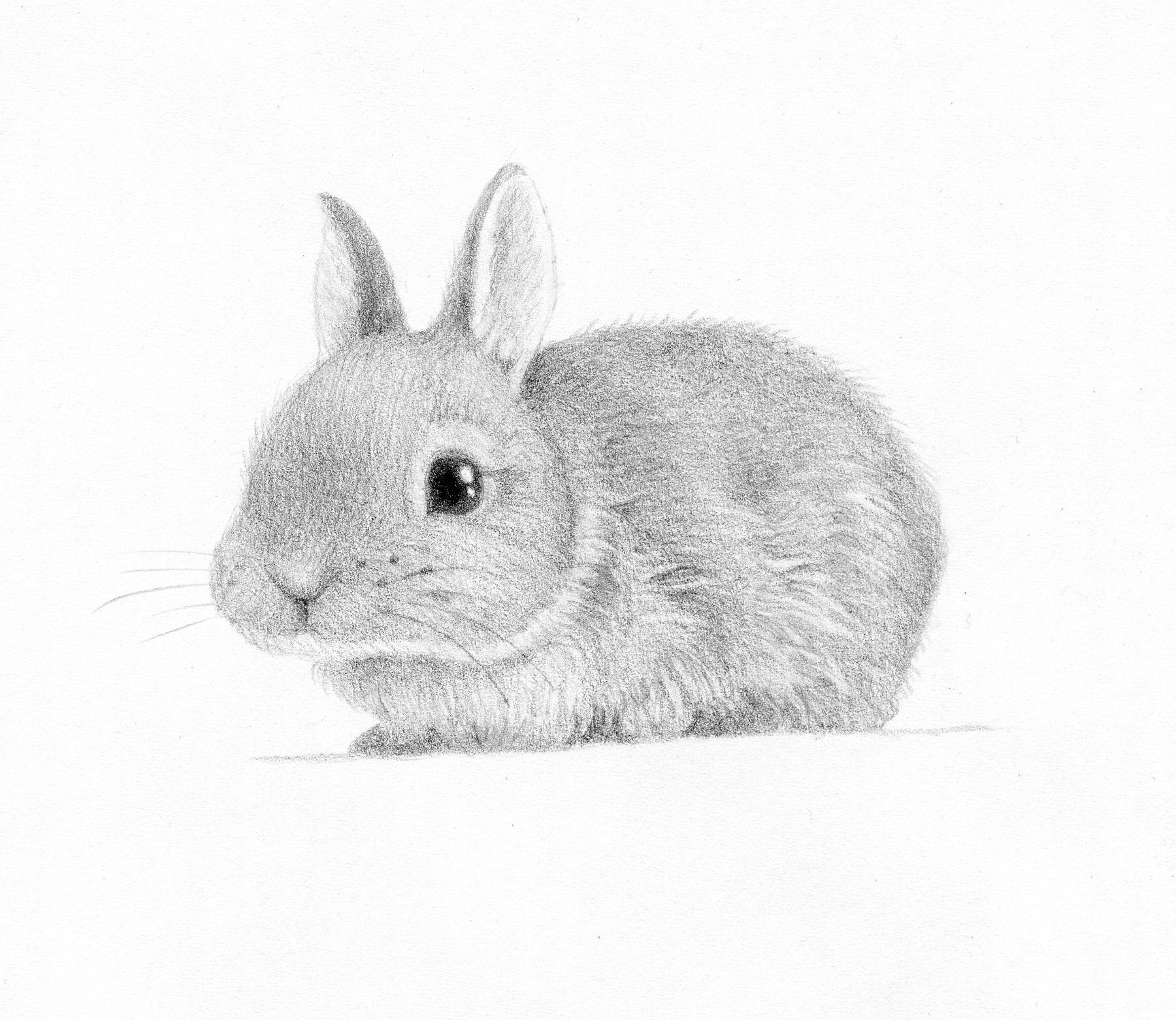 Drawn rabbid invasion Spot bunny