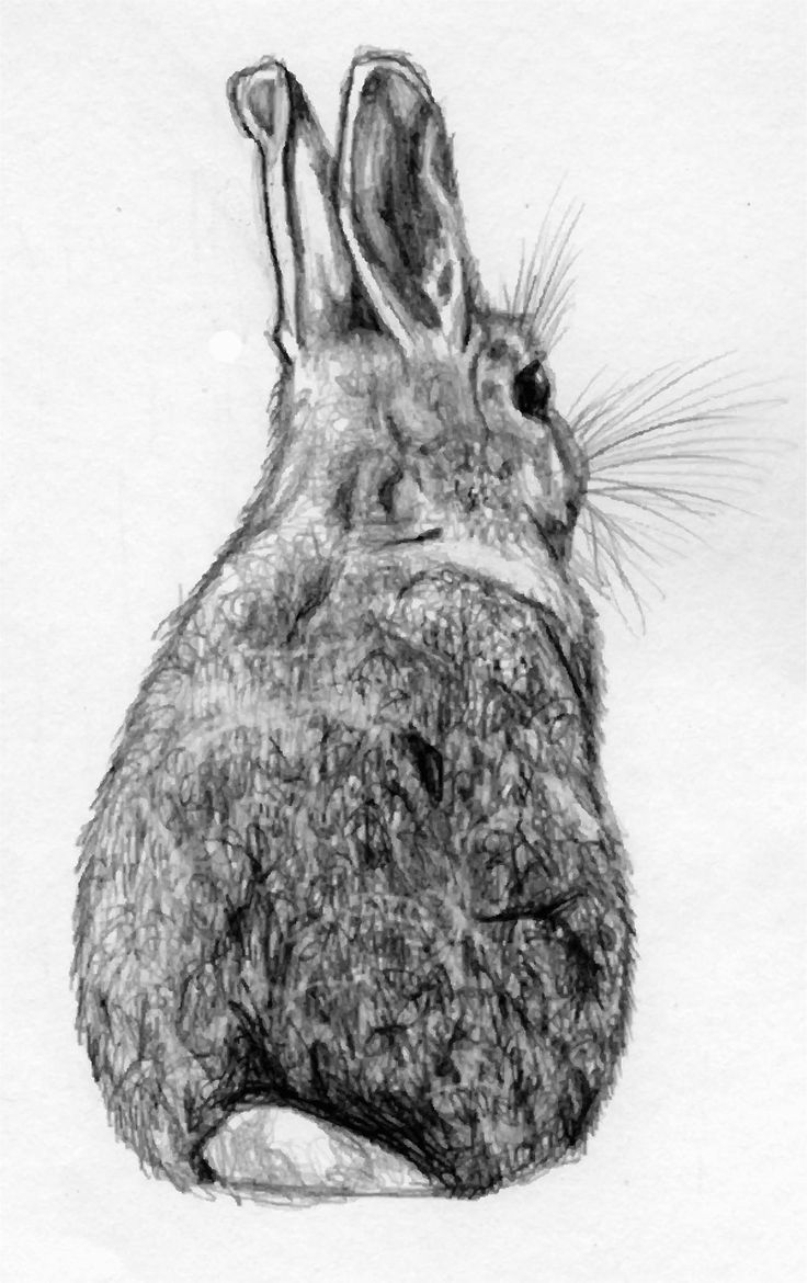Drawn rabbit black and white On his simple bunny sketch/drawing