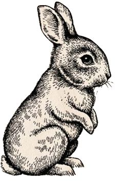 Drawn rabbit bunny line Of drawing line Wire Search
