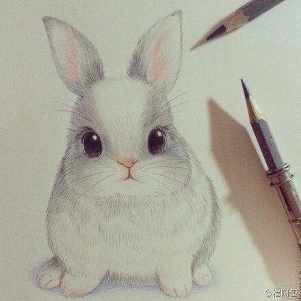 Drawn rabbit color Colored pencil Best 25+ rabbit