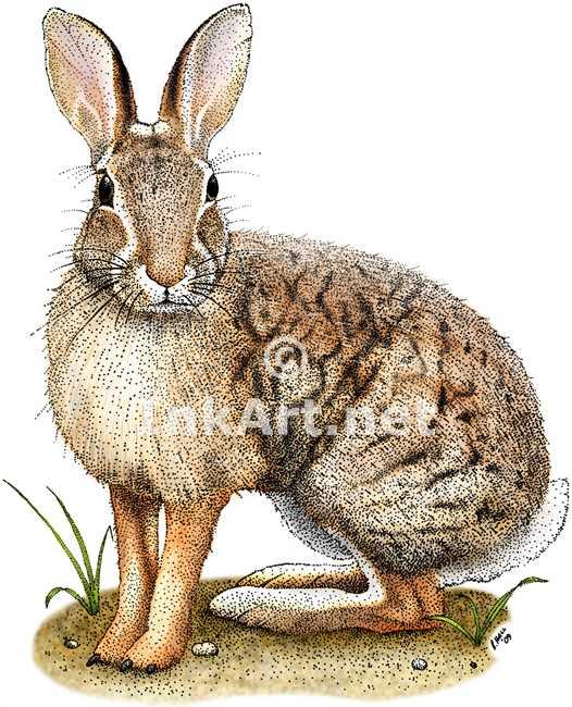 Drawn rabbit color Brush rabbit illustration Brush art