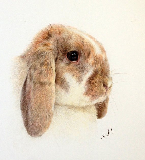 Drawn rabbit color Color Drawing Custom Color Drawing