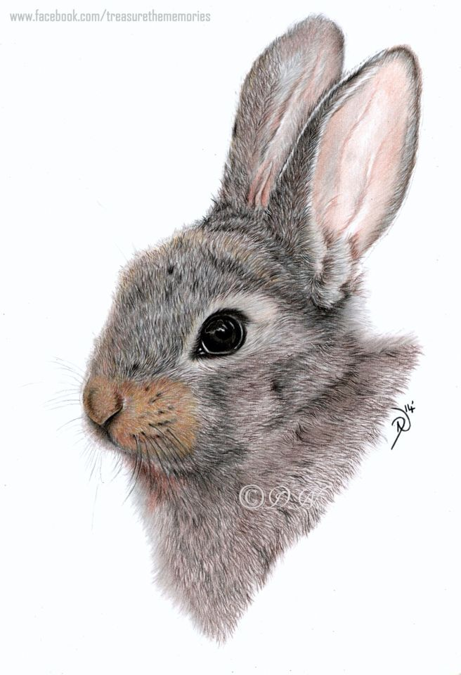 Drawn rabbit color Bunny 355 images on A4