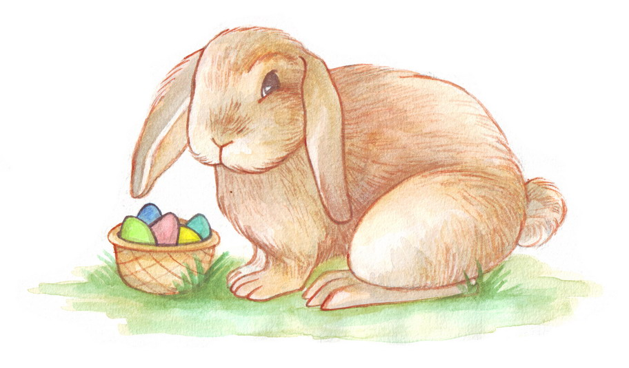 Drawn rabbit color  3 the Easter Draw